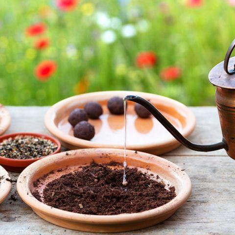 Samenbombe selber machen: Zutaten für Samenbomben