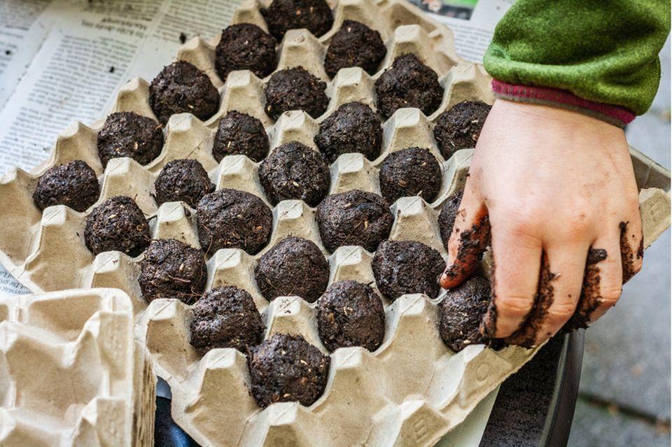 Samenbombe selber machen: Eierkarton mit Samenbomben