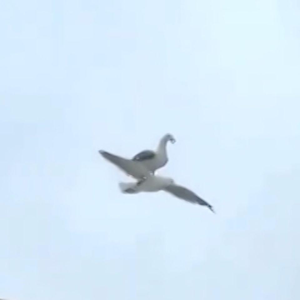 Möwe fliegt mit