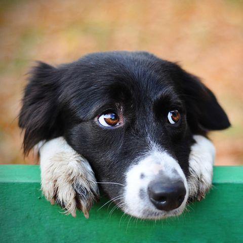 Verwirrter Hund