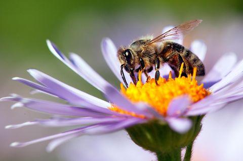 So rettet ihr Bienen das Leben