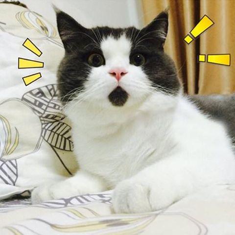 Diese Katze guckt immer, als ob sie gerade überrascht wird