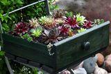 Upcycling Ideen Garten: Pflanzkübel aus alter Kommode