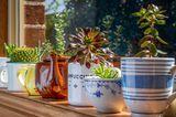 Upcycling Ideen Garten: Geschirr als Pflanztopf