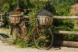 Upcycling Ideen Garten: Fahrrad mit Blumenkörbchen