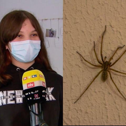 Spinne löst Polizeieinsatz aus