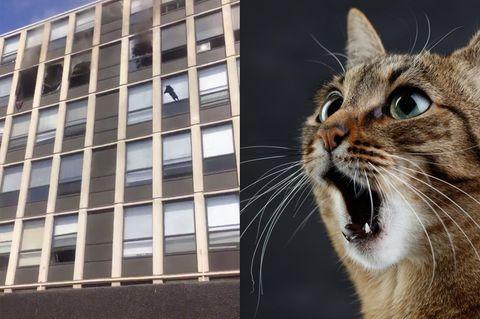 Katze springt aus Fenster