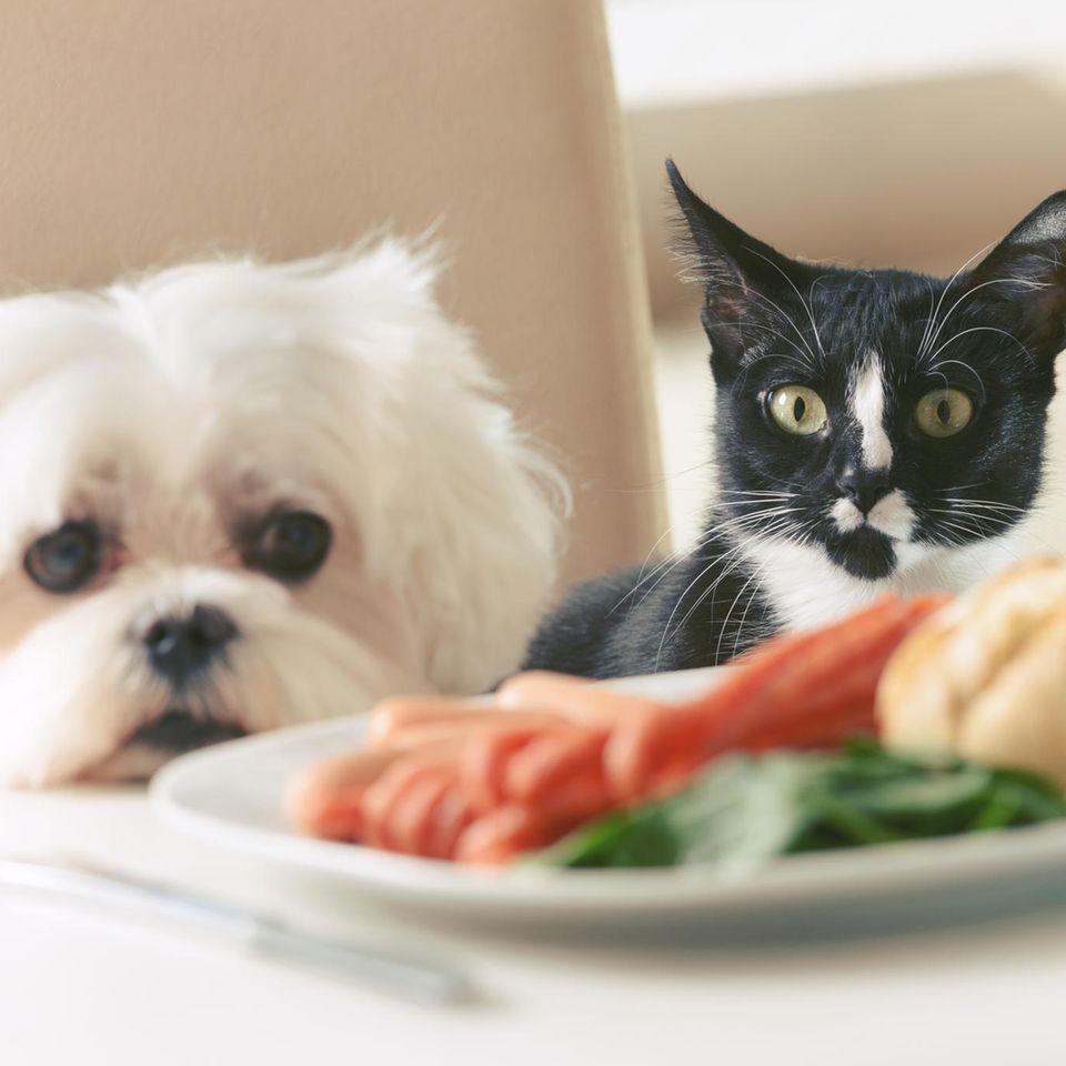 In der Schweiz werden Hunde und Katzen gegessen