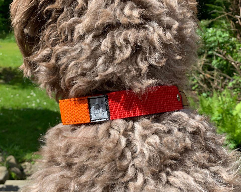 WowWow: Halsband mit integrierter Leine, Das Halsband von WowWow an einem Hund