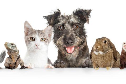 Das sagt es über dich aus, wenn du mit deinem Haustier sprichst