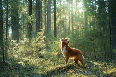 """Project Cleo"": Hundebesitzer nehmen Abschied"