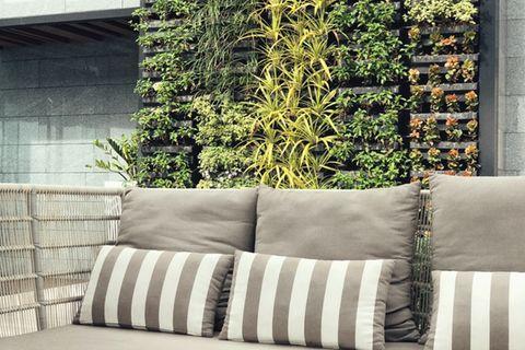 Vertikaler Garten auf dem Balkon: Outdoor-Sofa und Pflanzen