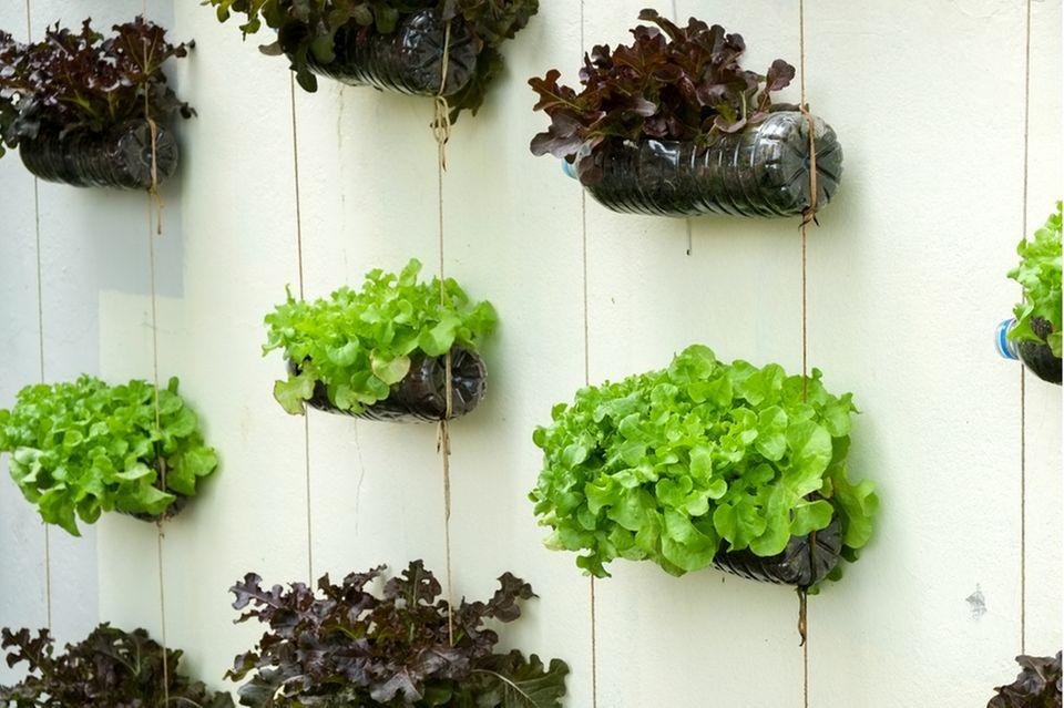 Vertikaler Garten auf dem Balkon: Upcycling-Flaschen mit Pflanzen