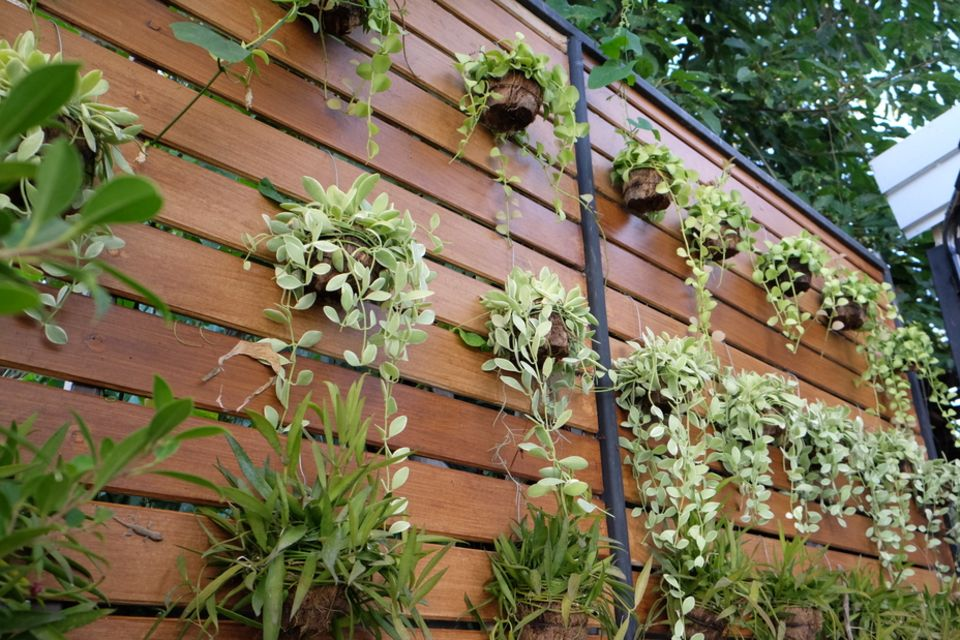 Vertikaler Garten auf dem Balkon: Sichtschutzwand mit Pflanzen