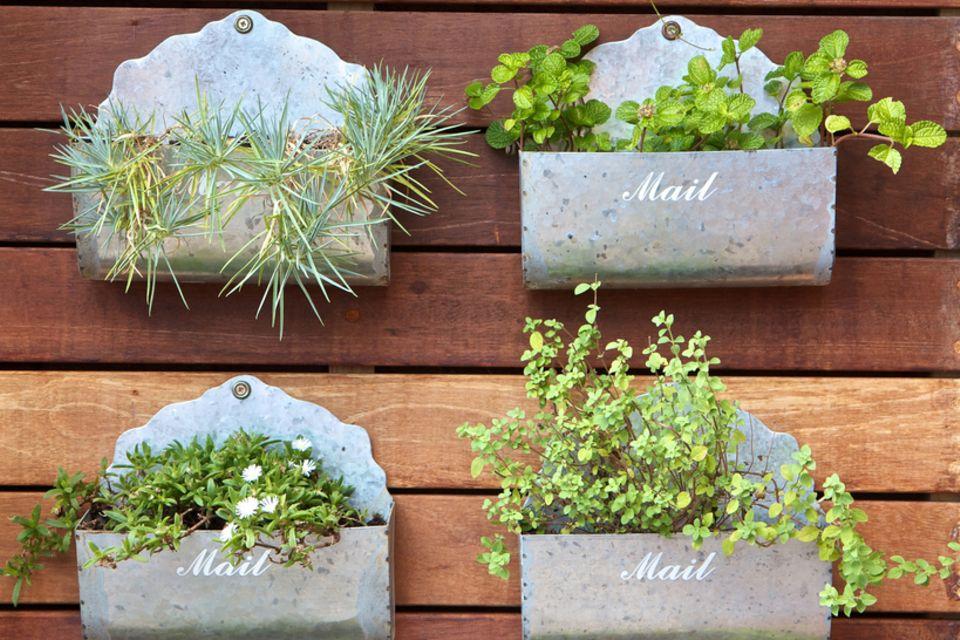 Vertikaler Garten auf dem Balkon: Alte Briefkästen mit Pflanzen