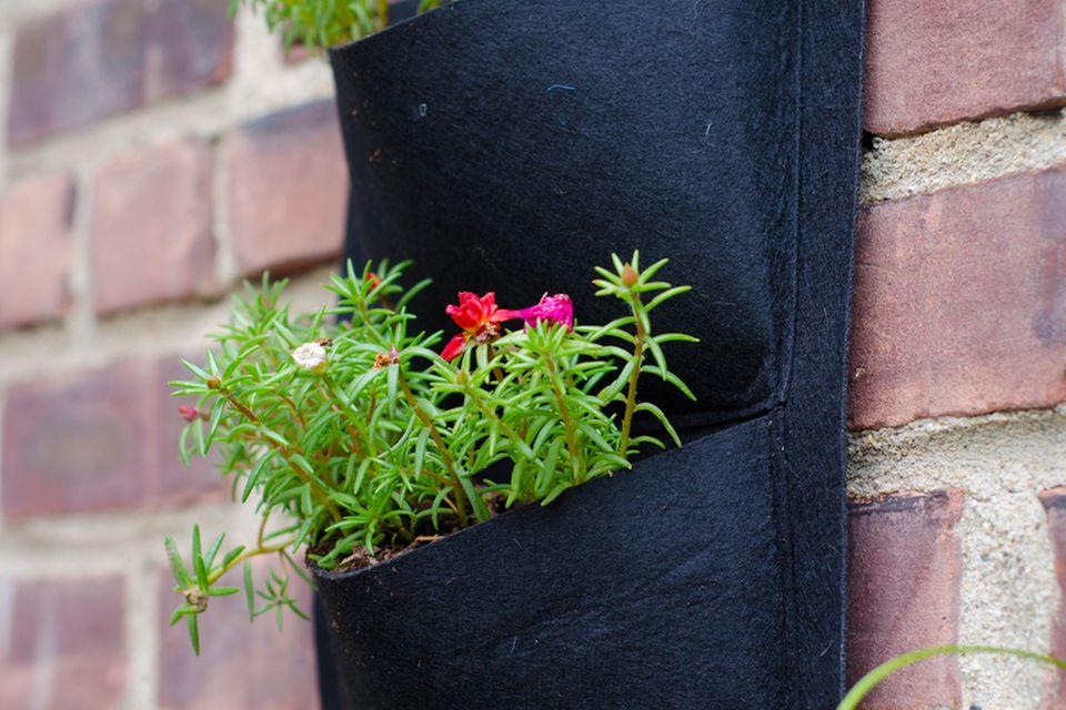 Vertikaler Garten auf dem Balkon: Pflanztasche mit Blume