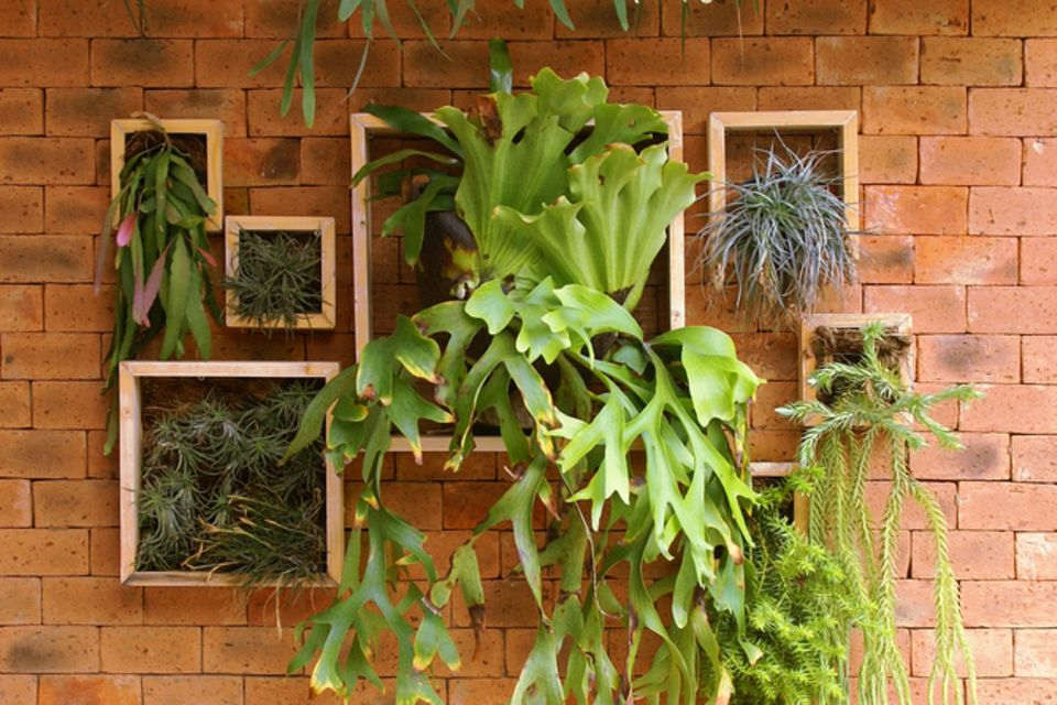 Vertikaler Garten auf dem Balkon: Holzrahmen an einer Wand mit Blumen befüllt