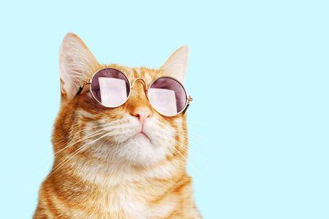 Katzen erziehen: Wie klappt's?