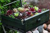 Terrassen-Deko selber machen: Sukkulenten in einer alten Schublade