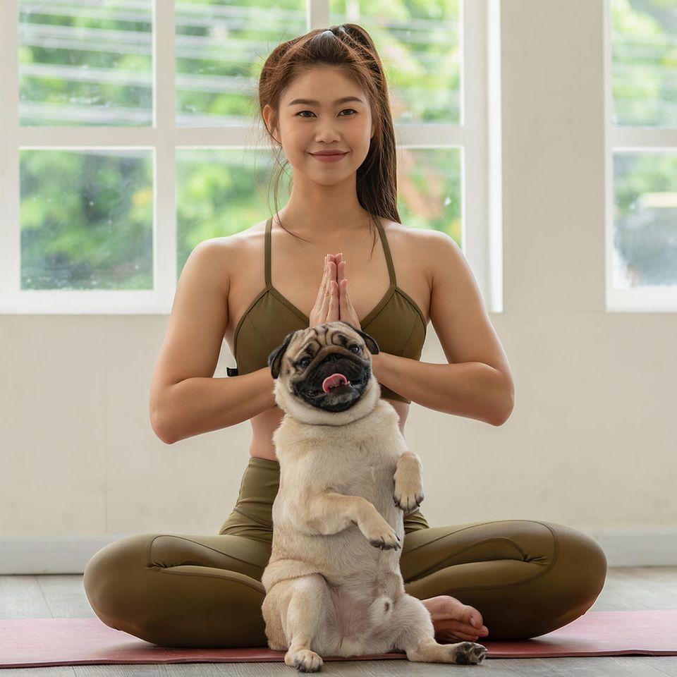 Dieser Hund trainiert mit