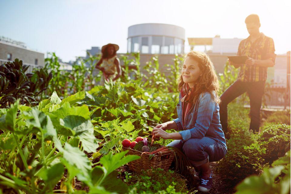 Urban Gardening: Gruppe von Leuten gärtnern