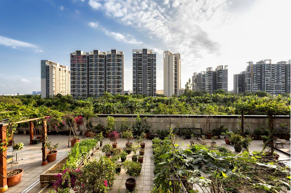 Urban Gardening: Gemeinschaftsgarten auf einem Dach