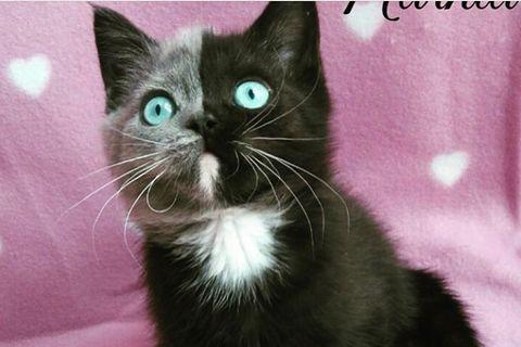 Narnia Katze