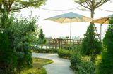 Gartenparty: Sonnenschirm