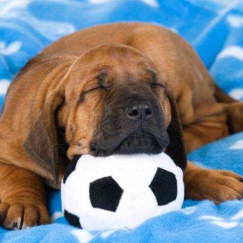 Fußball-EM: Hund liegt auf Fußball