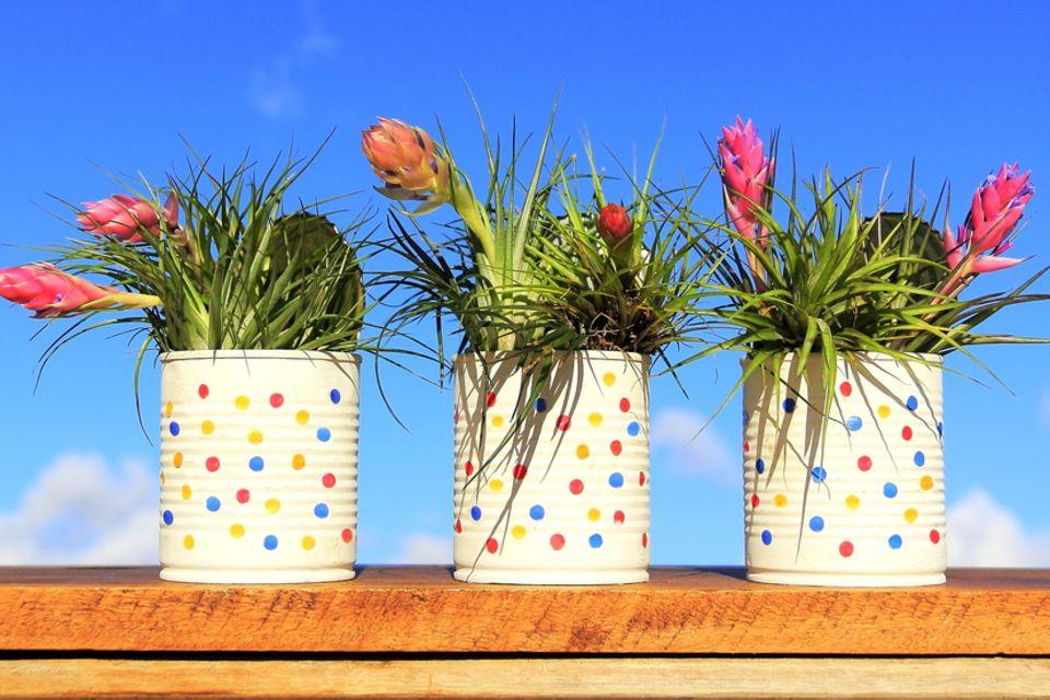 Blumentöpfe bemalen: Bemalte Konservendosen als Blumentopf