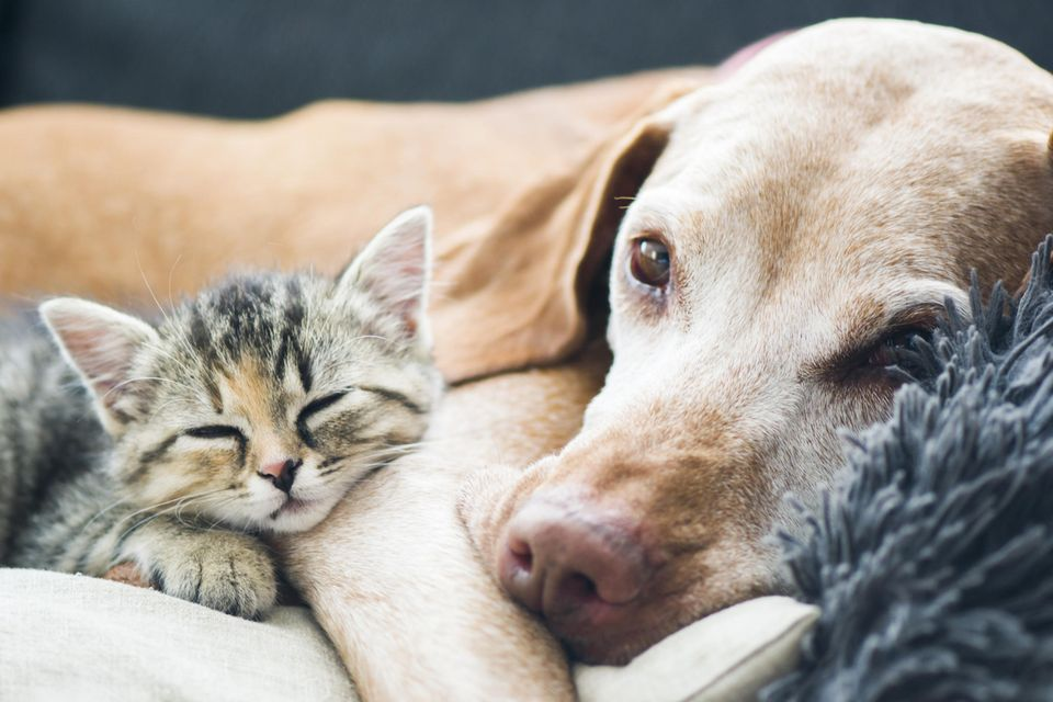 Süße Haustiere: Katze und Hund