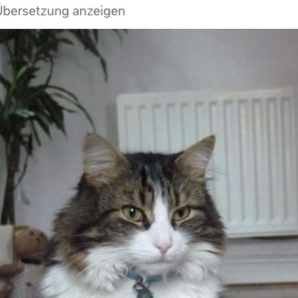 Wilde Haustier-Story: Katze