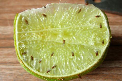 Fruchtfliegen vertreiben: Limette mit Fruchtfliegen