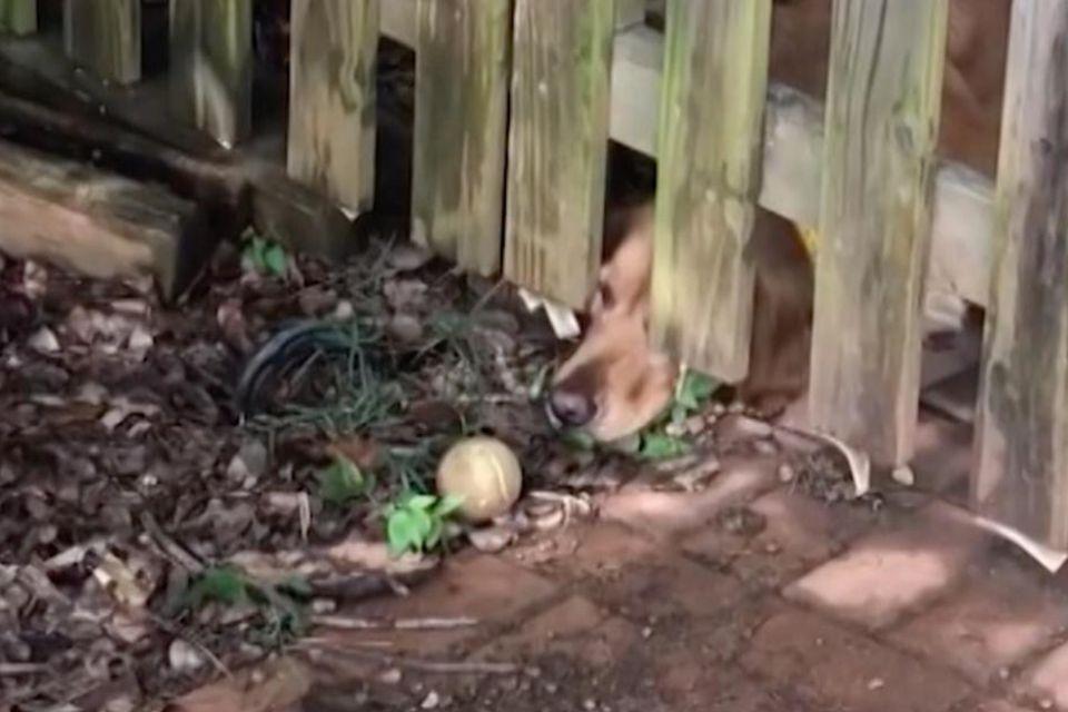 Hund trauert um Tennisball