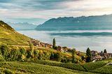 Das Weinbaugebiet Lavaux zwischen Lausanne und Montreux-Vevey gehört seit 2007 zum Weltkulturerbe der UNESCO. Die Stadt Lausanne ist größter öffentlicher Besitzer von Weinbergen in der Schweiz. Weinbars sind in Lausanne also besonders zu empfehlen.