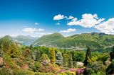 Nicht nur für Flora-Fans einen Ausflug wert: Azaleen, Rhododendren und Nadelbäumefindet man auf luftiger Höhe im botanische Park San Grato bei Lugano.