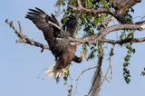 Comedy Wildlife Awards 2021: Vogel fliegt gegen Baum