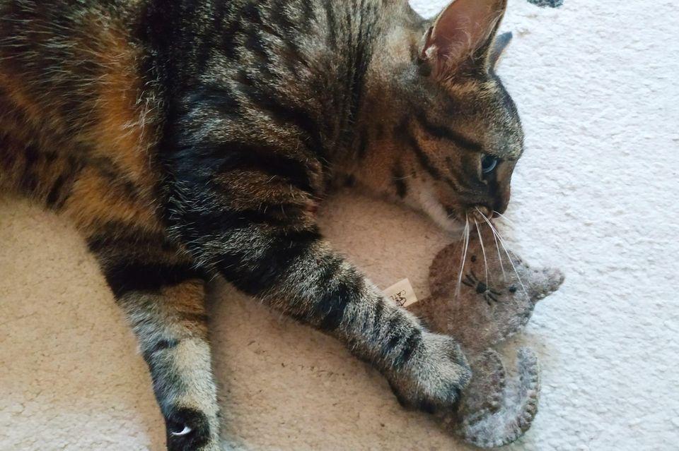 Catlabs Katzenspielzeug: Ivy mit dem Spielzeug