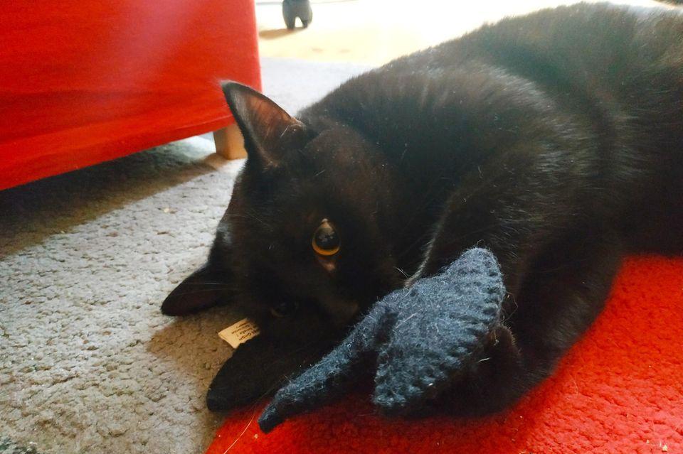 Catlabs Katzenspielzeug: Kite mit Catman