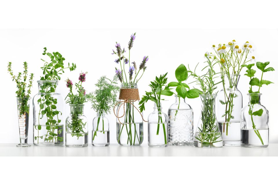 Upcycling mit Flaschen: Water Plants