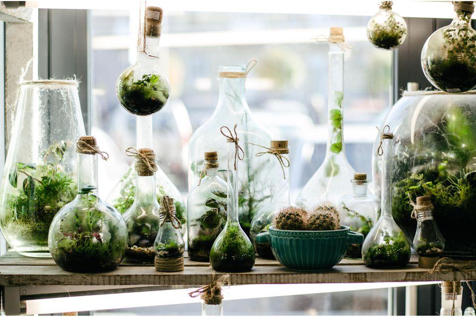 Upcycling mit Flaschen: Flaschengarten