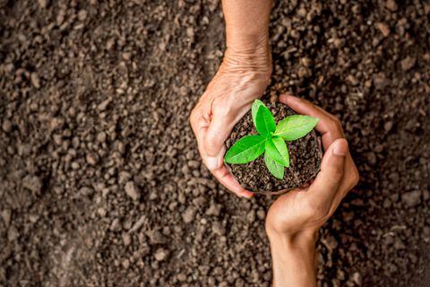 Horoskop: Zwei Hände pflanzen eine Pflanze