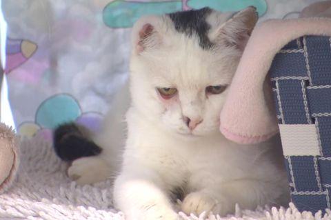 Einohrige Katze Nina