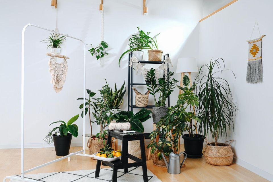 Verschiedene Pflanzen in einer Ecke des Zimmers