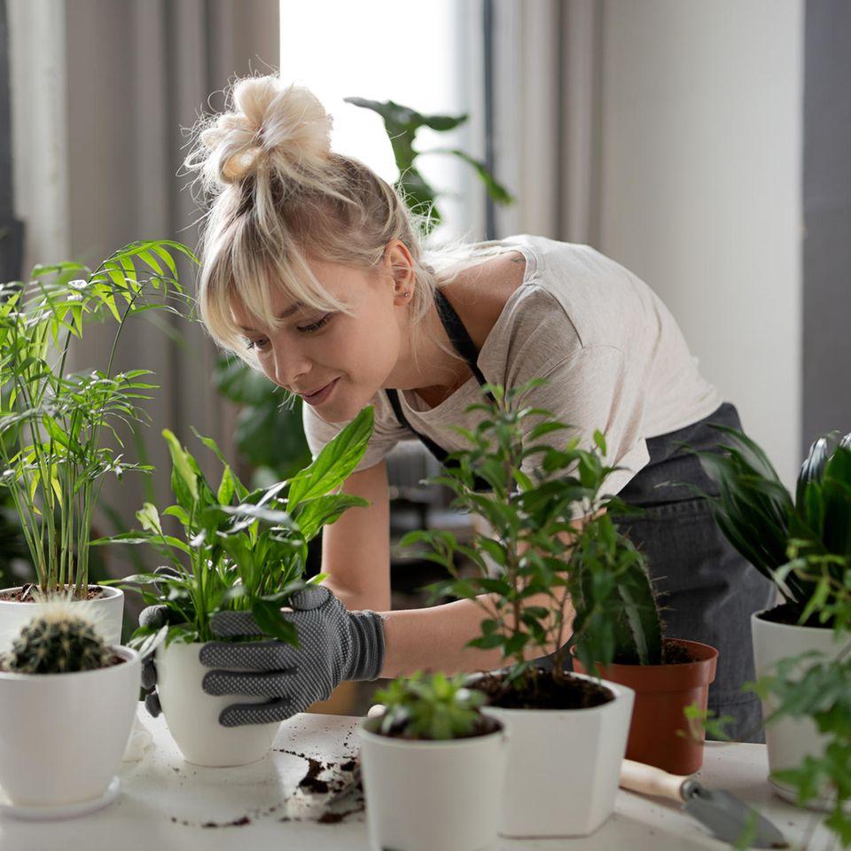 Eine junge Frau kümmert sich um ihre Pflanzen.