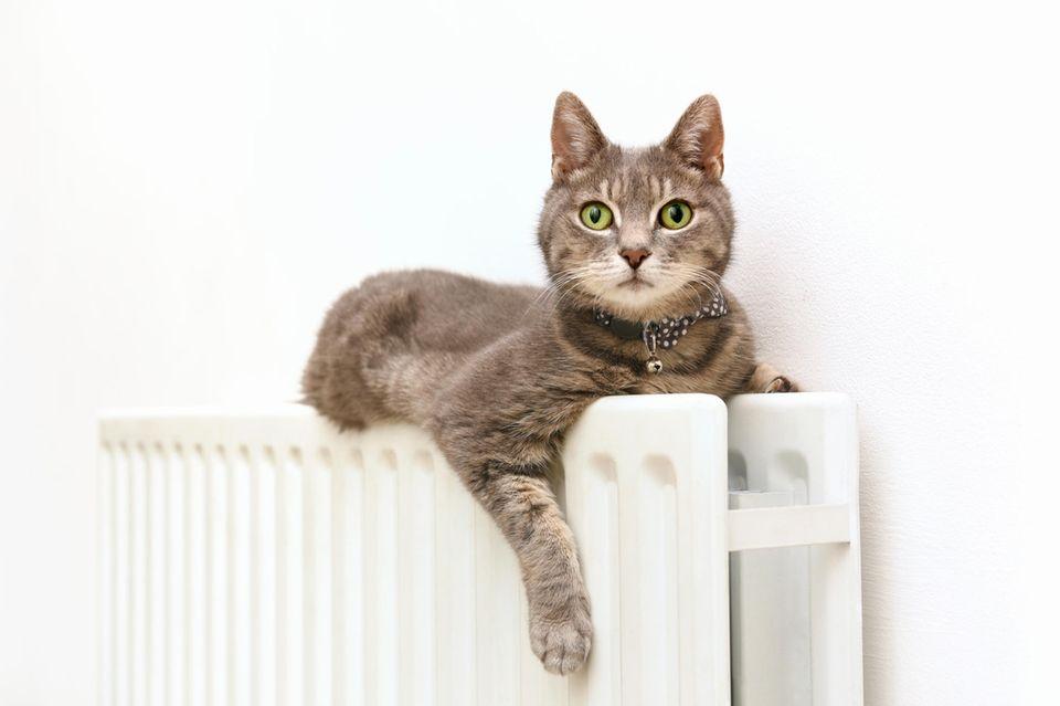 Heizungsfehler: Katze guckt irritiert von ihrer Heizung aus in die Kamera