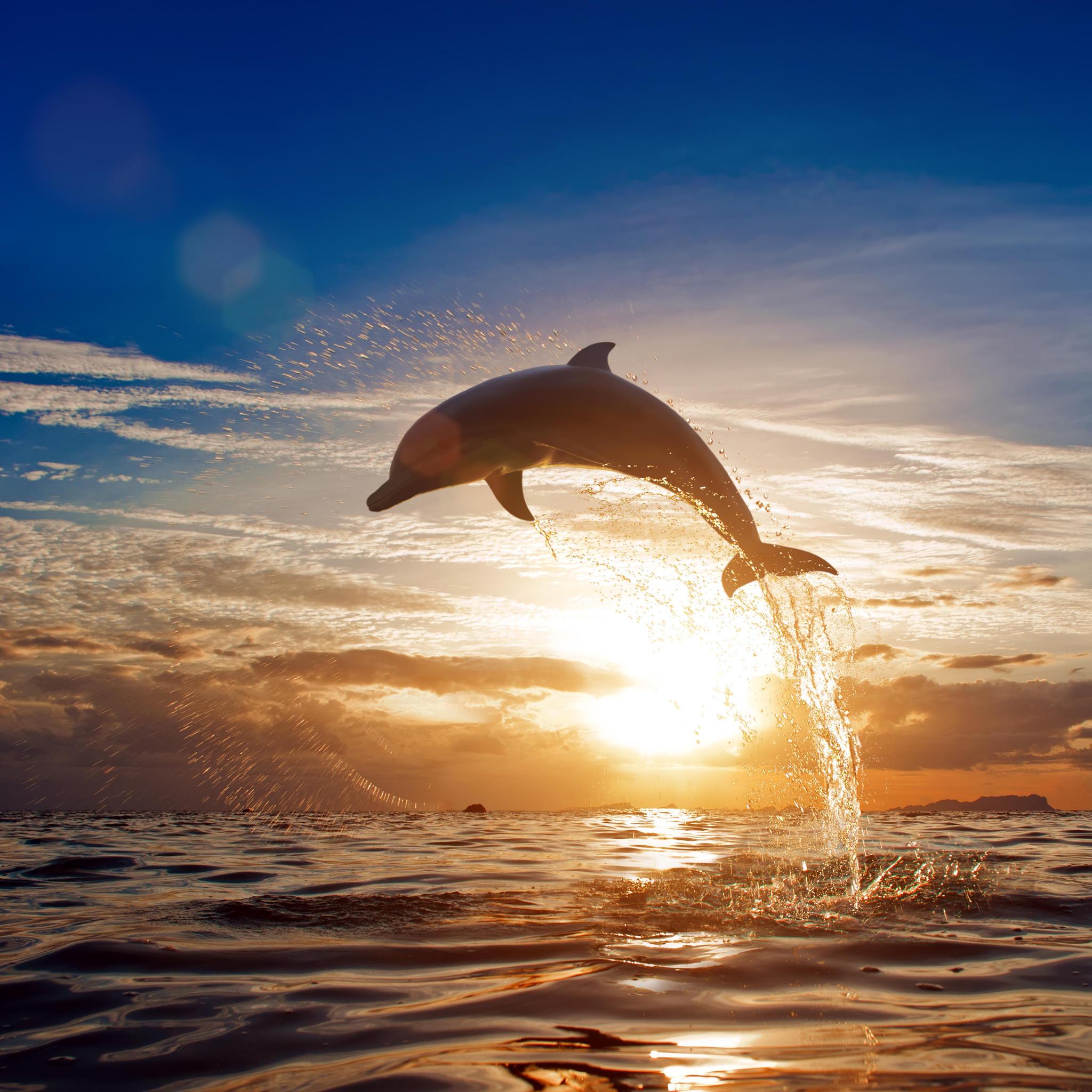 Hochschwanger steht sie am Meer - was dann passiert, ist märchenhaft