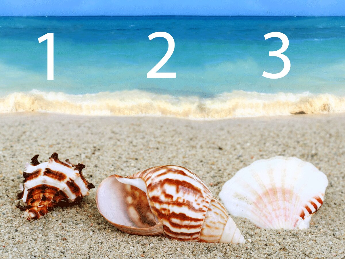 Welche dieser Muscheln gefällt dir spontan am besten?